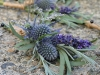 Scottish Thistle & Lavender