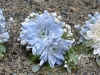 Blue Mist ~ Pin Style With Colour Enhanced Cushion Mums & Babys Breath