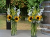 September Sunshine In Large Vases