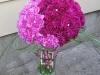 Fuchsia Infusion