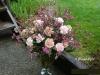 For Carnations Sake
