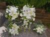 Lilies & More Bridal Suite