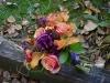 Autumns Desire